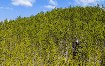 Top 5 des Cabanes Perchées pour prendre de la hauteur