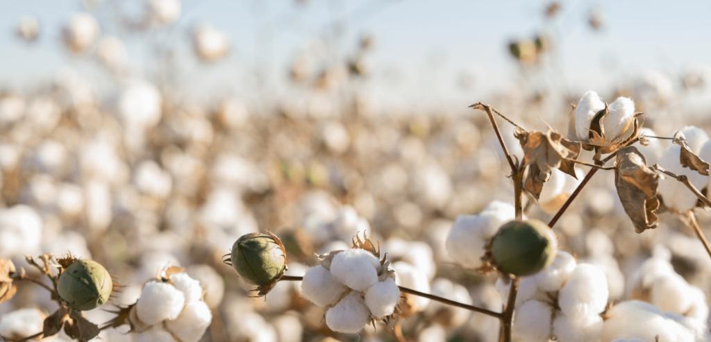 Linge de lit et écologie : le coton biologique