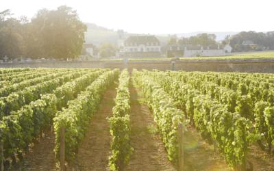 Parenthèse douceur en Bourgogne